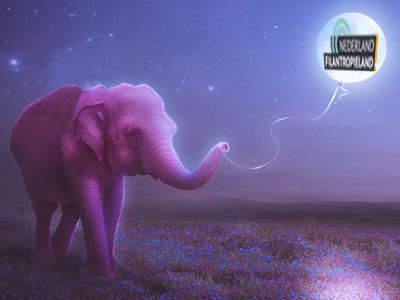 Nederland Filantropieland moet voorbij de roze olifant zien te komen